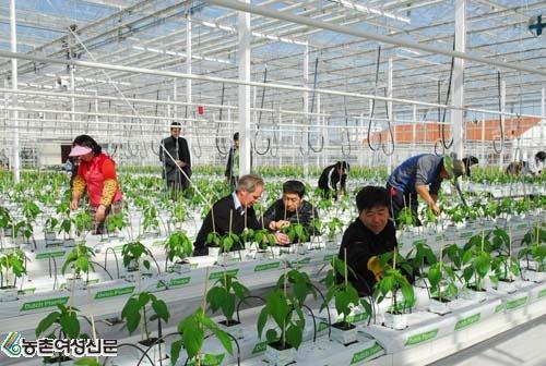 Tổng hợp đơn hàng nông nghiệp lương cao đi Xuất khẩu lao động Nhật bản