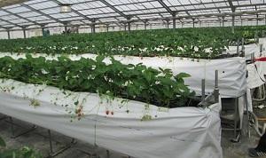 Hỗ trợ đặc biệt các đơn hàng nông nghiệp tại Nhật Bản vào tháng 01/2018