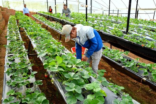 Đơn hàng nông nghiệp tại Nhật Bản làm những công việc gì ?