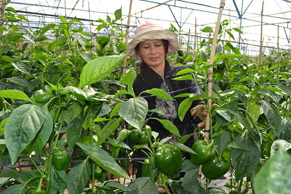Đơn hàng nông nghiệp tuyển 28 Nữ làm việc tại Hokkaido Nhật Bản