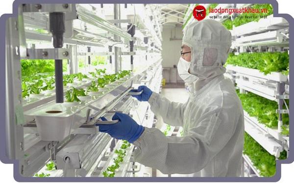 Xuất khẩu lao động Nhật Bản ngành nông nghiệp có gì đặc biệt?
