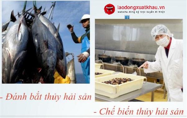 Hỏi đáp: Tại sao đánh bắt hải sản lại là ngành kinh tế quan trọng của Nhật Bản?
