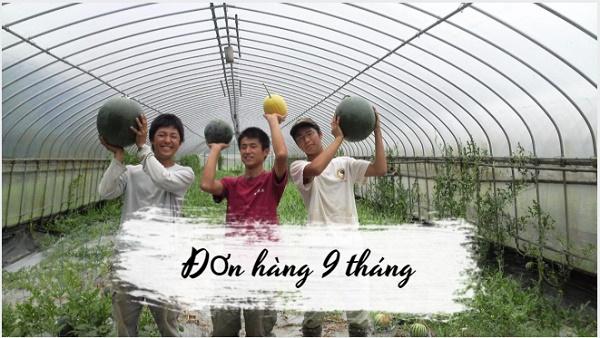Đơn hàng thời vụ 9 tháng cho nam làm nông nghiệp tại Nhật Bản