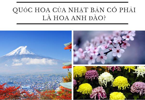 Quốc hoa của Nhật Bản có phải là hoa anh đào?