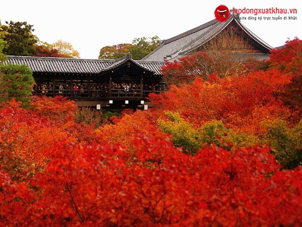 Chiêm Ngưỡng Mùa Lá Phong Sặc Sỡ Ở Nhật Bản