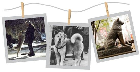 10 năm đứng đợi chủ và hành trình được phong thánh của chú chó Hachiko