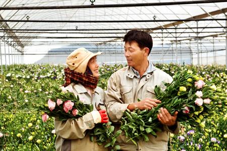 12 Nam làm vườn, canh tác nông nghiệp tại Shizuoka