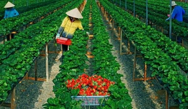XKLĐ Nhật Bản ngành nông nghiệp gồm những công việc gì?