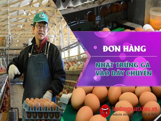 Xuất khẩu lao động Nhật đơn hàng nhặt trứng gà tại Oita xuất cảnh nhanh