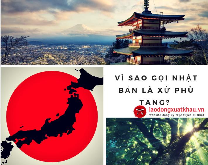 Vì sao gọi Nhật Bản là xứ phù tang? Những bí ẩn đằng sau đất nước mặt trời mọc
