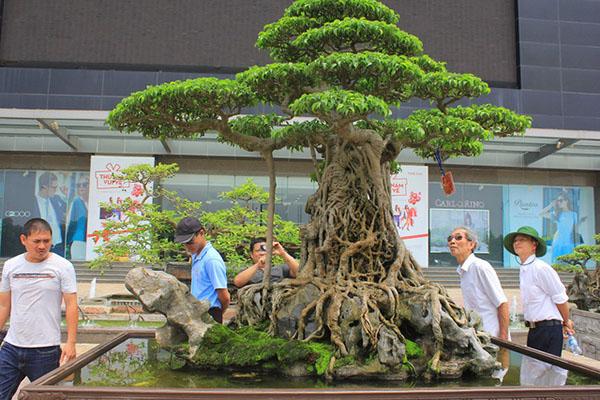 Giải Đáp Bí Mật Nghệ Thuật Bonsai Phong Cách Nhật Bản