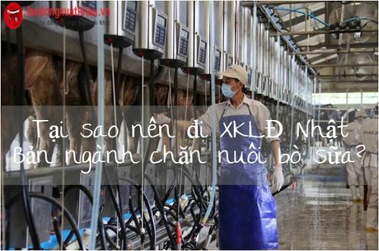 Tại sao bạn nên tham gia đơn hàng chăn nuôi bò sữa?