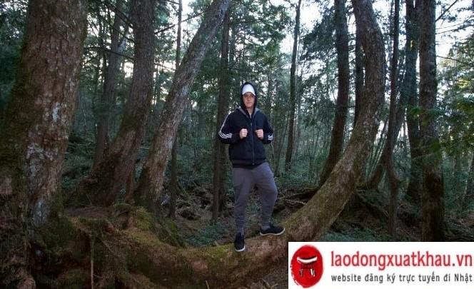 Trải nghiệm thú vị tại Aokigahara - khu rừng tự sát ở Nhật Bản