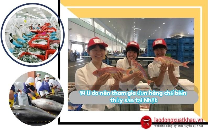 14 lí do nên tham gia đơn hàng chế biến thủy sản tại Nhật