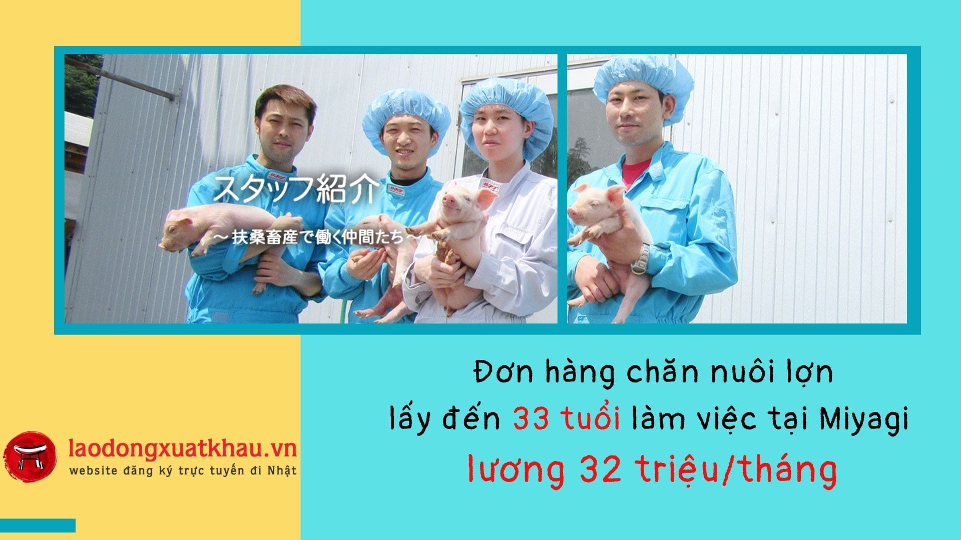 Đơn hàng chăn nuôi lợn lấy đến 33 tuổi, lương 32 triệu/tháng tại Miyagi