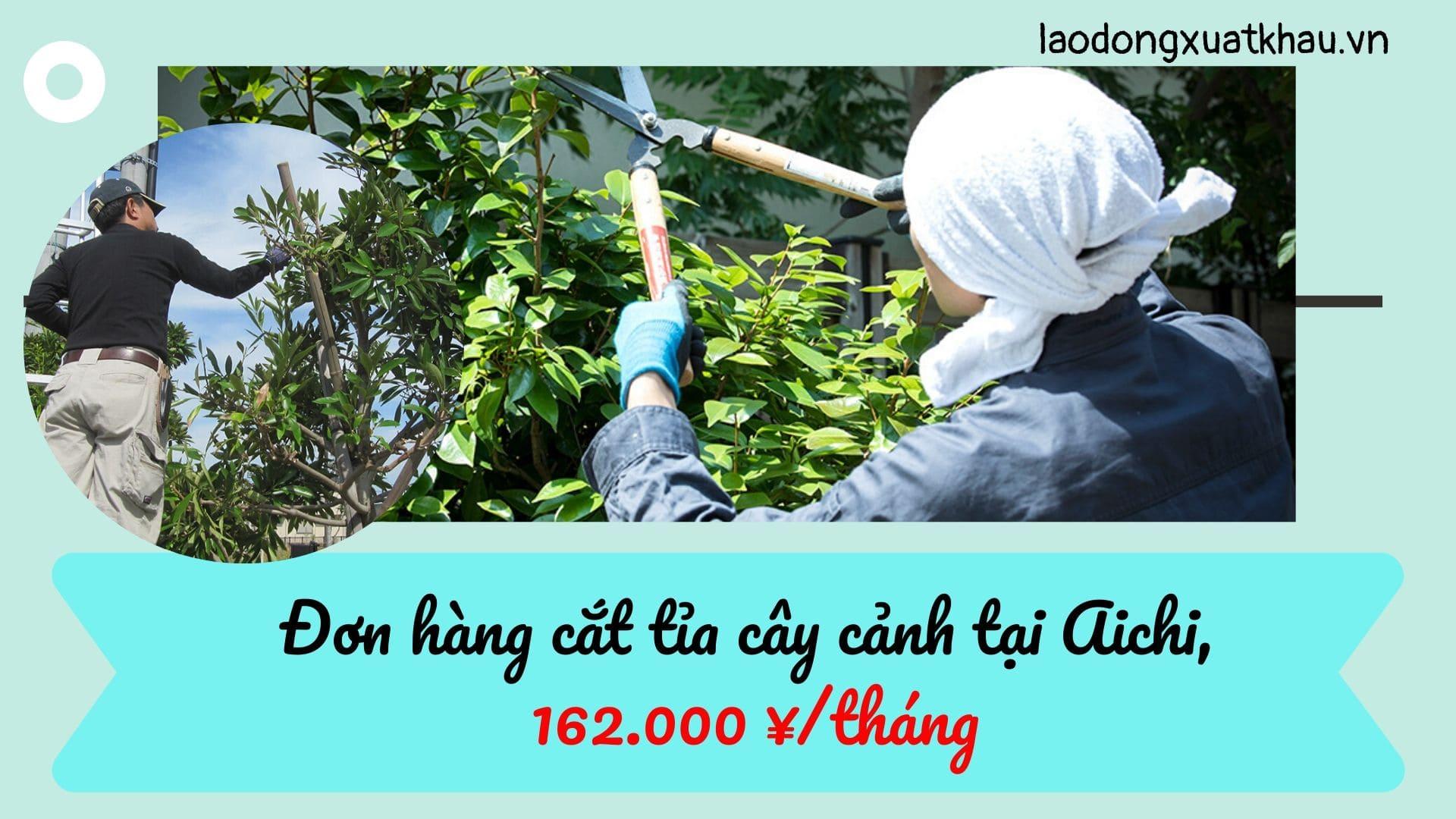 Đơn hàng cắt tỉa cây cảnh tại Aichi lương khủng lên đến 162.000 yên/tháng
