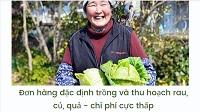 Đơn hàng đặc định trồng và thu hoạch rau, củ, quả - chi phí cực thấp