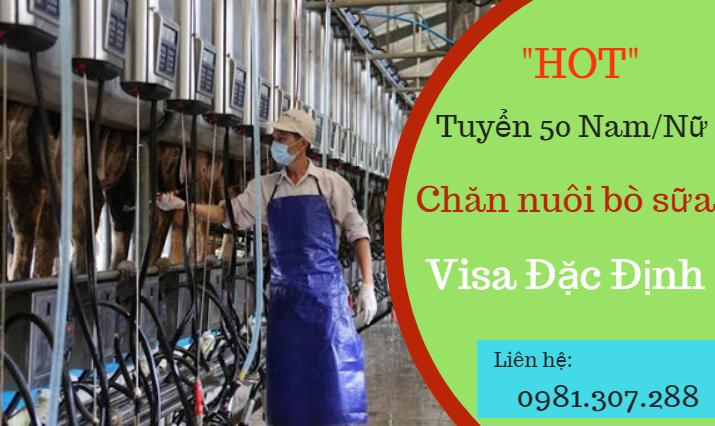 Tuyển 50 Nam/Nữ quay lại Nhật làm chăn nuôi bò sữa visa đặc định
