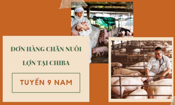 Tuyển 9 Nam đơn hàng chăn nuôi lợn tại Chiba: THU NHẬP 35 TRIỆU/THÁNG
